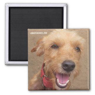 Amazon Humane Society Magnet: Precious Dog Series- Magnet
