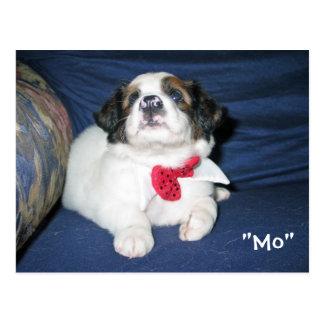 Amazon Humane Society Postcard: Precious Dog Serie Postcard