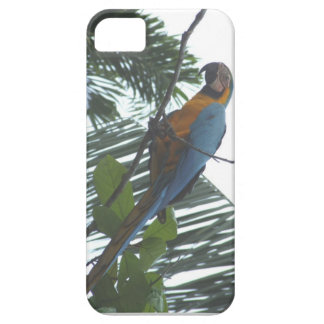 Amazon Macaw iPhone 5 Cover