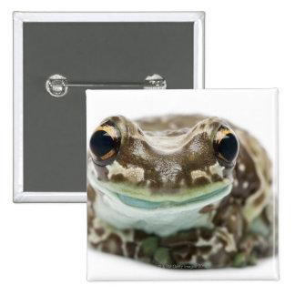 Amazon Milk Frog - Trachycephalus Resinifictrix 2 Inch Square Button