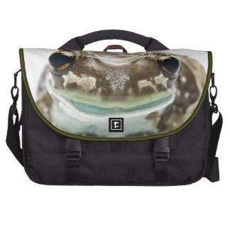 Amazon Milk Frog - Trachycephalus Resinifictrix Laptop Computer Bag