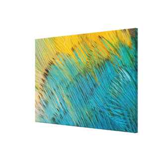 Amazon Parrot Feather Abstract Canvas Print