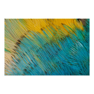 Amazon Parrot Feather Abstract Poster