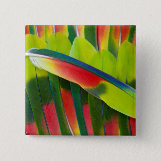 Amazon Parrot Feather Still Life 2 Inch Square Button