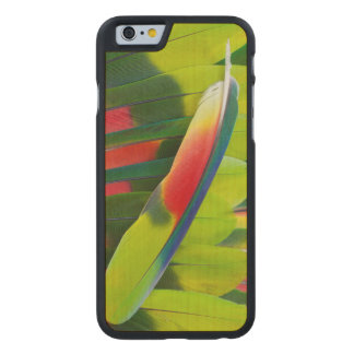 Amazon Parrot Feather Still Life Carved Maple iPhone 6 Case