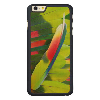 Amazon Parrot Feather Still Life Carved Maple iPhone 6 Plus Case