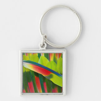 Amazon Parrot Feather Still Life Keychain
