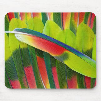 Amazon Parrot Feather Still Life Mouse Pad