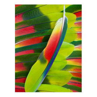 Amazon Parrot Feather Still Life Postcard