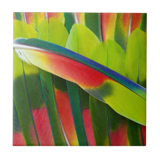 Amazon Parrot Feather Still Life Tile
