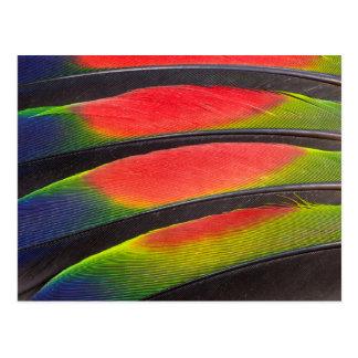 Amazon parrot feathers postcard