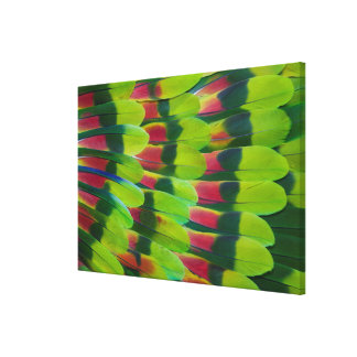 Amazon Parrot Green Feather Design Canvas Print