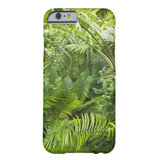 Amazon Rainforest, Amazonia, Brazil 2 Barely There iPhone 6 Case