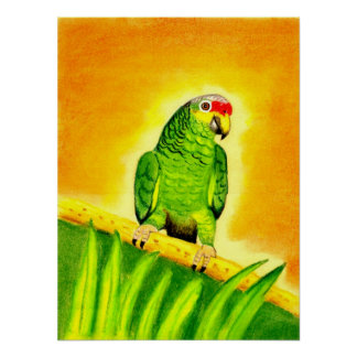 Amazon Red Lored Parrot Bird Portrait Poster