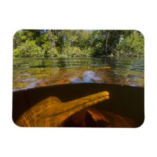 Amazon River Dolphins (Inia geoffrensis) Ariau Magnet