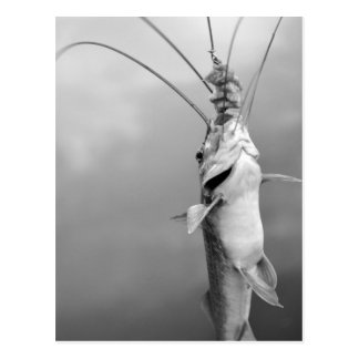 Amazonas fish postcard