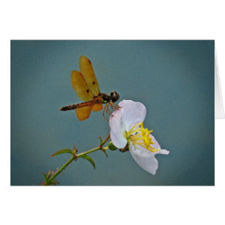 Amber Dragonfly on Wildflower Note Cards