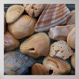 Amber Sea Shells Poster