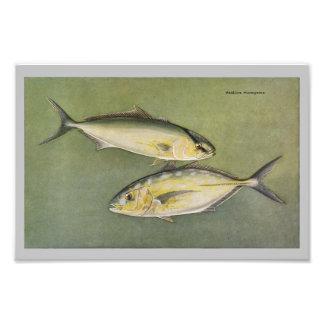 Amber & Yellow Jack Vintage Fish Print Photo