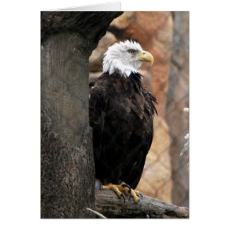 amerian eagle card
