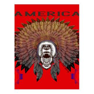 America to bear phase bears postcard