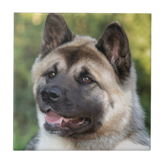 American Akita Dog Tile