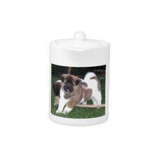 American Akita Puppy Dog
