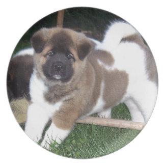 American Akita Puppy Dog Plate
