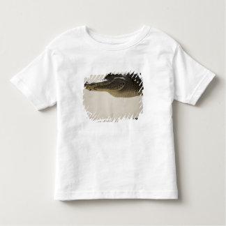 American Alligator, Alligator Tshirt