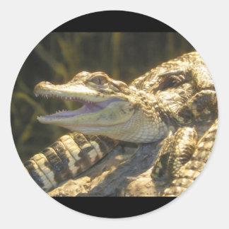 American Alligator Mouth Open Classic Round Sticker