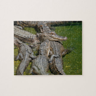 American Alligators Jigsaw Puzzle