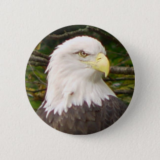 American Bald Eagle Button