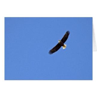 American Bald Eagle Card