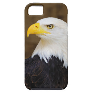 American Bald Eagle Haliaeetus Leucocephalus iPhone 5 Cover
