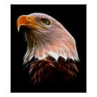 American Bald Eagle Head Poster