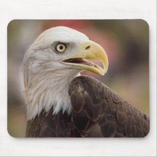 """American Bald Eagle"" Mouse Pad"