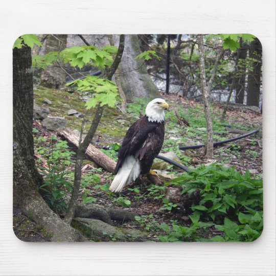 American Bald Eagle Mouse Pad