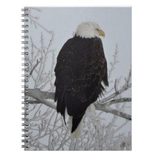 American Bald Eagle Notebooks