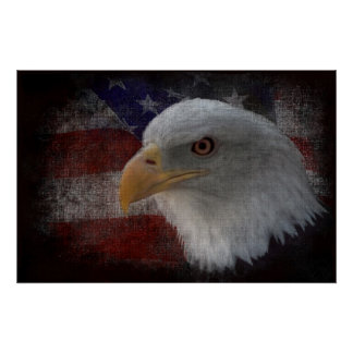 American Bald Eagle on Flag Poster