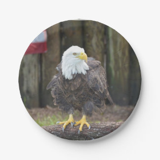 American Bald Eagle Perched on a Log 7 Inch Paper Plate