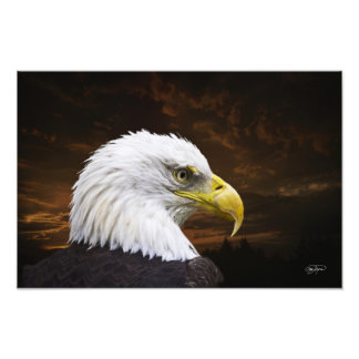 American Bald Eagle Print - Buy,then Frame it