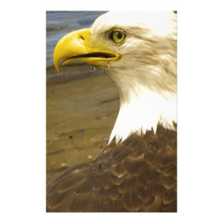 American Bald Eagle Stationery