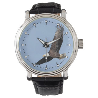 American Bald Eagle Watch