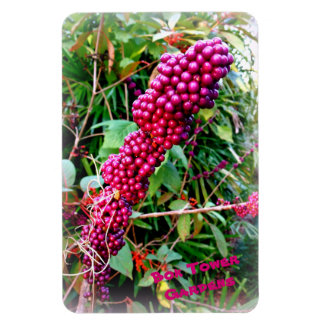 American Beautyberry at Bok Tower Gardens Florida Magnet