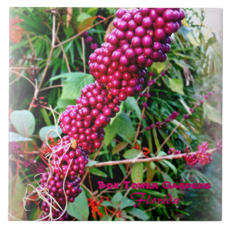 American Beautyberry at Bok Tower Gardens Florida Tile