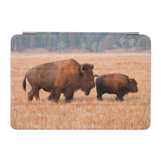 American Bison (Bison Bison) Cow And Calf iPad Mini Cover