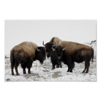 American Bison in Winter Poster