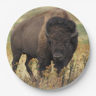 American bison paper plate