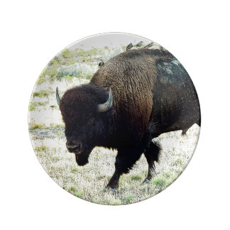 American Bison Plate