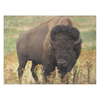 American bison tablecloth